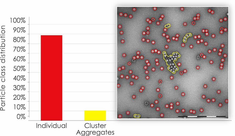 Image and graph showing particle class distribution in precentage between cluster(aggregates and individual AAV particles.